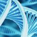 Данные молекулярно-генетических исследований в свете тканевой модели