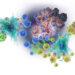 Концепция иммунологического надзора и ее критика
